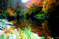Autumn Woodland and River Teifi
