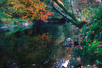 Autumn Reflections on the river Teifi