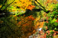 Autumn colour on the River Teifi